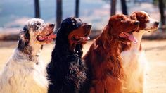 The 4 Setters