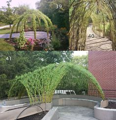 English Basketry Willows | Bonnie Gale |  Custom Living Willow Structures  |  Gallery