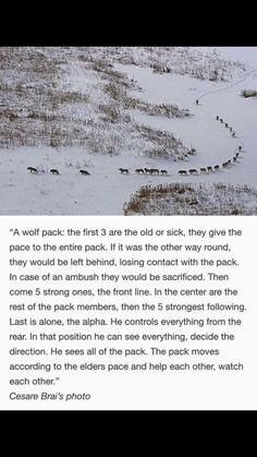 Wolf pack! Such and awesome quote! Love this!
