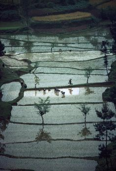 by Bruno Barbey, Rice fields China near Loshan