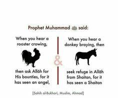 Bukhari, Muslim & Ahmad, really? Prophet Muhammad Quotes, Hadith Quotes, Ali Quotes, Muslim Quotes, Religious Quotes, Islam Hadith, Allah Islam, Islam Quran, Alhamdulillah