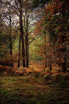 Shades of Autumn in an English forest.
