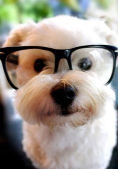 Cute Pet Contest: the Finalist - Cute - Stylist Magazine