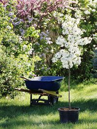 Looking to learn how to plant a tree correctly? We have all the tips you need: http://www.bhg.com/gardening/trees-shrubs-vines/care/the-proper-way-to-plant-a-tree/?socsrc=bhgpin100513plantingatree