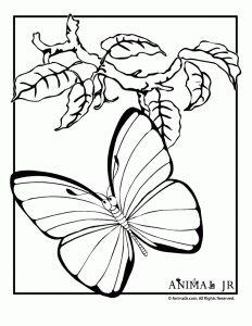 5013460b341687ca85d5f5d98188e2c0--free-kids-coloring-pages-preschool-crafts