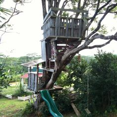 I don't want anything this high up! But I like the idea of reusing pallets for the treehouse.