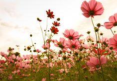 Sommer, Sonne, Blumenwiese: Die sonnige Jahreszeit lockt nicht nur euch hinaus ins Grüne, auch eine Vielzahl an Blühpflanzen fühlt sich bei den warmen Temperaturen sehr wohl. Deshalb ist die Auswahl an bunten Blumen im Sommer besonders groß. Zu den beliebtesten Arten gehören unter anderem Ringelblumen, Sommerastern, Dahlien, Tagetes und Fingerhut. #OBI #Ratgeber