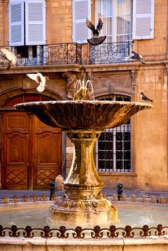 Pigeons playing in the fountain, Aix en Provence, France