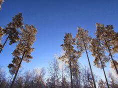 Winter trees   ~Finnish nature through my eyes - Sari Lapikisto
