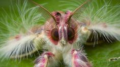BBC - Earth - The unexpected beauty of bugs