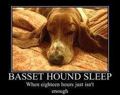 effyeahbassethounds