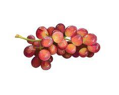 Fruit & Vegetables on Behance