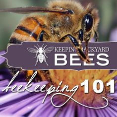 """We at Keeping Backyard Bees encourage anyone who's interested in raising bees and becoming a new beekeeper, or a """"new-beek,"""" to learn all they can. (And, if possible, give beekeeping a try!)<BR /><BR />  This article is a beginners guide to all things beekeeping. It's a collection of articles that can help you understand the world of bees and help you decide if beekeeping is right for you."""