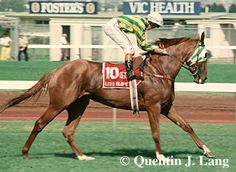 1991 Let's Elope - Melbourne Cup winner - Google Search