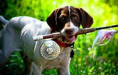 Gone Fishing, Fishing Lures, Fishing Hole, Trout Fishing, Pointer Puppies, German Shorthaired Pointer, Good Buddy, Fish Camp, Training Your Puppy