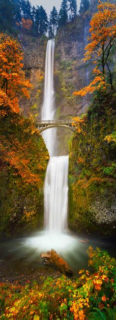 Multnomah Falls in Autumn Colors von William Lee auf - Reisen & Urlaub Multnomah Falls Oregon, Oregon Falls, Beautiful Waterfalls, Beautiful Landscapes, Beautiful World, Beautiful Places, Landscape Photography, Nature Photography, Photography Tips