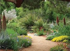 drought tolerant garden path
