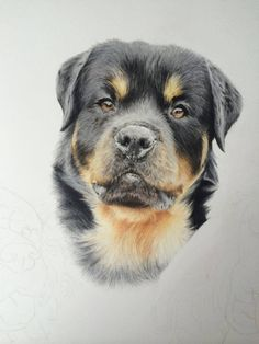 Cute Puppies, Cute Dogs, Dogs And Puppies, Cute Couple Drawings, Dog Drawings, Realistic Drawings, Animal Drawings, Dog Pencil Drawing, Miss My Dog
