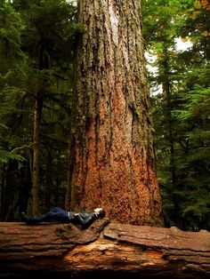 Cedar Tree at Cathedral Grove, Vancouver Island, British Columbia, Canada by Joshua Jackson Vancouver Island, Canada Vancouver, Ontario, Zen Meditation, Quebec, Montana, Photos Of The Week, Canada Travel, Pacific Northwest