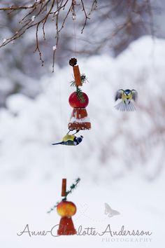 ♥ Fyra årstider - mitt liv på landet: Gör din egen fågelmat
