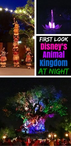 Disneys Animal Kingdom opens after sunset for the first time ever starting Memorial Day weekend Get a sneak peek at all the nighttime offerings - Rivers of Light, safaris at sunset, entertainment, thrill rides, and more. Disney Time, Disney Fun, Disney Travel, Disney 2017, Disney Family, Disney World Parks, Walt Disney World Vacations, Disney Worlds, Dream Vacations