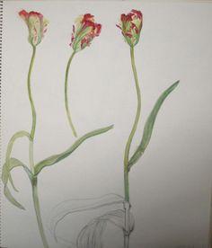 Tulip, Flaming Parrot, chisako-fukuyama