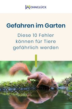 Tiny Houses, Berlin, Gardening, Pets, Animals, Green Lawn, Earthworms, Natural Garden, Small Animals