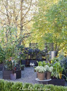Trädgårdsflow: Köksträdgården
