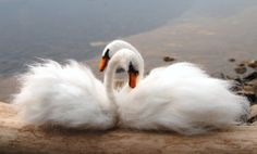 Needle Felted Swans. Pair of Swans. Love Swans. Needle Felted Birds. Wedding Decor. Wedding Gifts For The Couple. Wedding Swans. Bird Felted