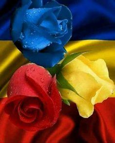 Rose Pictures, My Favorite Things, Plants, Cards, Roses, Jumma Mubarak, Eid, Beautiful Flowers, Google