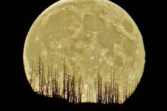 Retired physics teacher Gordon R. Gore takes a powerful Supermoon shot in Kamloops - BC | Globalnews.ca (I know this doesn't look real but it is, legit photo) Amazing!