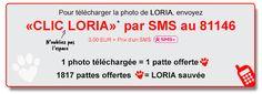 BLOC SMS, CLic Animaux, Loria