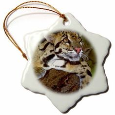3dRose California, Clouded leopard, Wildlife Waystation - US05 BJA0196 - Jaynes Gallery, Snowflake Ornament, Porcelain, 3-inch