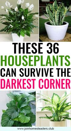 All the plants shown below can thrive easily without the sunlight and the best part is the majority of those plants can easily survive in artificial light too indoor zero sunlight houseplants gardening joinhomesteaders # Potted Plants, Garden Plants, Patio Plants, Outdoor Plants, Indoor Flowering Plants, Silk Plants, Succulent Plants, Herb Garden, Succulents