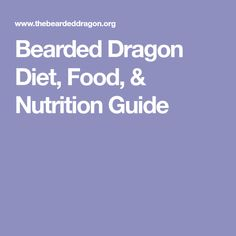 Bearded Dragon Diet, Food, & Nutrition Guide
