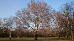 Vienna, Winter, Explore, Plants, Tree Structure, Winter Time, Plant, Winter Fashion, Planets