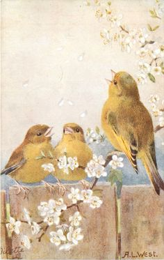 2 birds sitting on fence, another on flowering branch, 1942.
