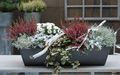Garden center Berghausener green experience Autumnal plant ideas - All About Balcony Flowers, Balcony Plants, Balcony Garden, Container Flowers, Container Plants, Fleurs Toussaint, Gemüseanbau In Kübeln, Pot Plante, Most Beautiful Gardens