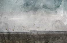 Äänetön puutarha (sarjasta Hiljaisia harhoja)   Silent Garden (from the series Quiet Mirages)