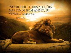 7 Melhores Imagens De Leão Da Tribo De Juda Tribe Of Judah Lion