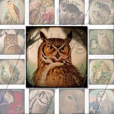 Majestic Owls 1  Instant Download Digital Collage by calicocollage, $4.15