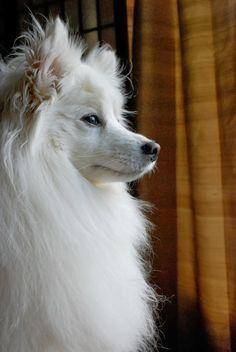 5 Most affectionate dog breeds ♡