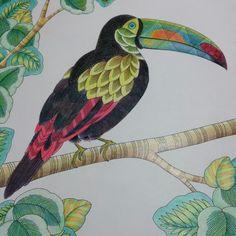 From Millie Marottas Animal Kingdom Coloured By Me