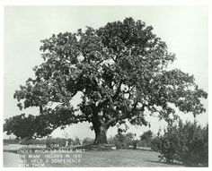 the council oak tree | Historic Locations, Council Oak