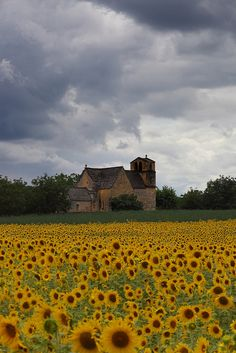 Sunflowers in Dordogne, France | Stephen Laverack how can this be so cheery, cheery, cheery, CREEPY