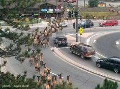 Now this is something that you won't see everyday unless you happen to live in Evergreen, CO