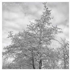 A White World. It gives so much without asking anything back. So enjoy the Wonders of #mothernature. She's just pure, good & beautiful. #breathe #whiteworld #inspiration #instadaily #followme #followback #getinspired #followmeback #dreams #followmenow #nature #lovewinter #lovenature #dutchlandscape #seasons #snow #photography #february #winter #trees #sky #thoughts #newideas #settinggoals #freespirit #creative #loveoutside #girlboss #girlwithavision