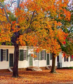 Colonial Williamsburg  | Jerry Patterson. Beautiful in the Fall, we would eat Sweet Potato Muffins and Hot Cider as we warmed by a fire.