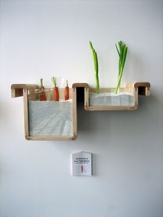 Kill your fridge: A sandbox to keep root vegetables upright helps them stay fresher, longer