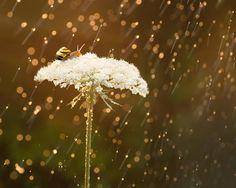 Snail in Summer Rain: 8x10 nature photograph. by AnInspiredLens